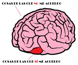 Cerebro dentro